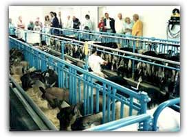Dairy goat milking parlor